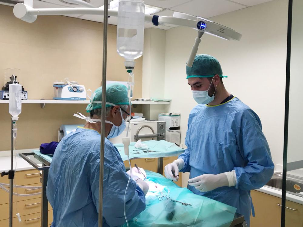 Pratdesaba Veterinaris Osona - Josep i Adrià fent una cirurgia a quiròfan