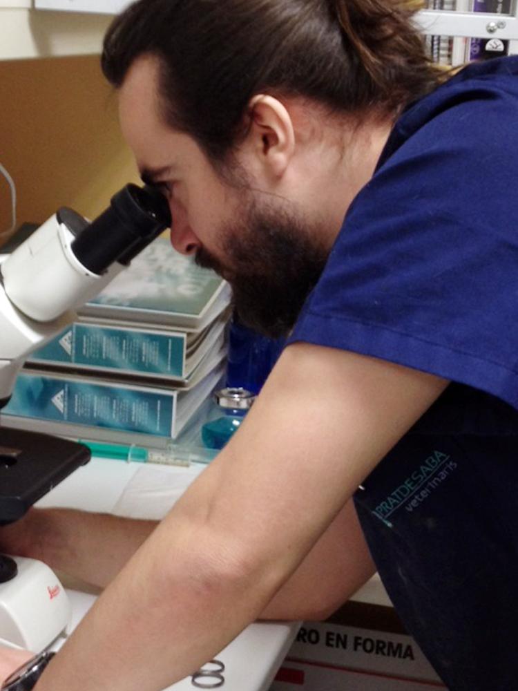 Pratdesaba Veterinaris Osona - Dídac al microscopi