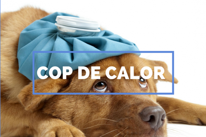 LES ALTES TEMPERATURES PODEN OCASIONAR DANYS IMPORTANTS A LA TEVA MASCOTA. HAS SENTIT PARLAR DE «COP DE CALOR?»